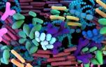 Notre intestin héberge 140 000 virus !