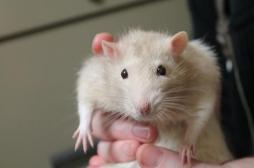 Des chercheurs découvrent des neurones de gagnant