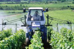 Grossesse :les pesticides impliqués dans la prévalence de l'autisme