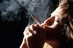 Les effets visibles de la  consommation occasionnelle de cannabis sur le cerveau