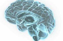Alzheimer : découverte d'un récepteur impliqué dans la perte de mémoire