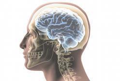 Autisme: des différences de structure découvertes dans le cerveau