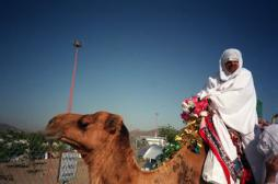 Coronavirus : un chameau infecté par le virus en Arabie Saoudite