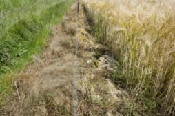 Pesticides : les effets s'étendent sur trois générations