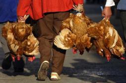 Virus H7N9 : la Chine augmente le niveau d'alerte
