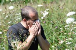 Allergies : la pollution rend les pollens plus agressifs