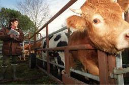 Vente d'antibiotiques: les vétérinaires dans le collimateur