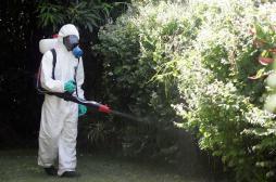 Chikungunya : alerte maximum aux Antilles pour les vacances
