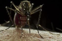 Nouvelle-Calédonie: la dengue fait une 8e victime