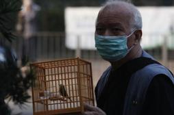 Grippe aviaire : premier décès dû au H7N9 à Hong Kong