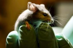 Acide folique : la supplémentation affaiblirait le système immunitaire des sujets âgés