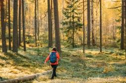 Marcher en forêt permet de diminuer le stress