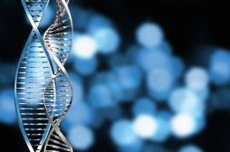 Obésité : l'espoir d'un régime personnalisé grâce à la génétique