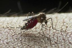 Dengue : le vaccin recommandé par l'OMS