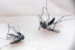 Vaccin contre la dengue : le Brésil l'autorise en zone endémique