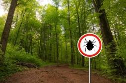 Maladie de Lyme : un mécanisme