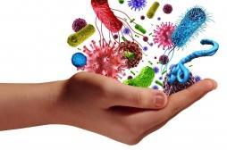Pourquoi l'antibiorésistance s'accélère