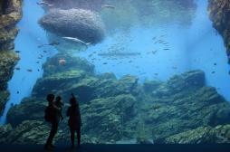 Stress : 10 minutes devant un aquarium pour retrouver sa sérénité