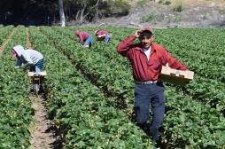 Nouveaux clusters : des travailleurs saisonniers sous surveillance