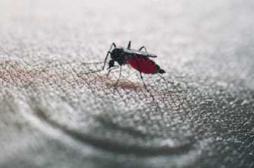 Chikungunya : plus d'1 cas importé sur 3 se trouve en PACA