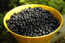 Manger des fruits entiers réduirait le risque de diabète