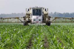 Intolérance au gluten : l'herbicide Roundup mis en cause