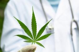 Expérimentation du cannabis thérapeutique en France : des précisions sur son application