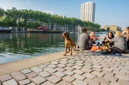 Pas de respect de la distanciation : l'alcool interdit sur les berges à Paris
