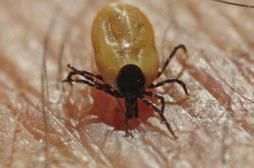 Mobilisation de députés autour de la maladie de Lyme
