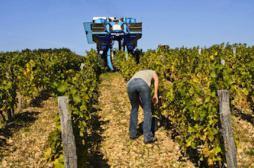Les viticulteurs victimes des pesticides