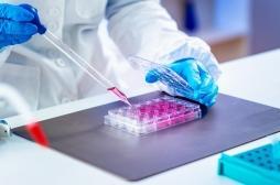 Un composé d'origine végétale pour une thérapie génique plus efficace et moins coûteuse