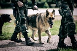 Des chiens pour détecter le coronavirus
