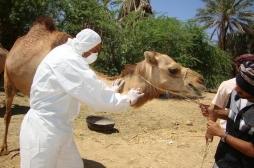 Arabie Saoudite : le coronavirus fait de nouvelles victimes