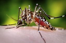 Dengue : un bébé de 6 mois décède en Nouvelle-Calédonie