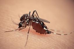 Dengue : la première campagne mondiale de vaccination débute