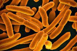 Etats-Unis : découverte d'une nouvelle bactérie multirésistante