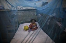 Vaccin contre la dengue : Sanofi prévoit une commercialisation en 2015