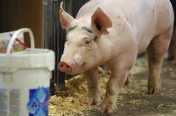 Médicaments : des pharmaciens accusent les vétérinaires