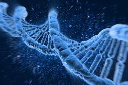 Sexualité : l'âge du premier rapport est influencé par les gènes