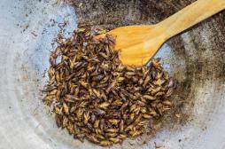Alimentation : quand les insectes garniront nos assiettes