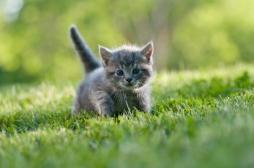 Oui, regarder des photos d'animaux trop mignons réduit notre stress