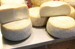 Salmonellose: rappel de produits à base de lait de brebis