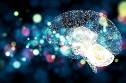 """Avoir un """"gros cerveau"""" n'est pas synonyme de meilleure mémoire"""