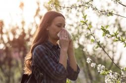 Allergie au pollen : quasiment toute la France classée zone à risque