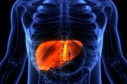 Cancer du foie: découverte d'une nouvelle protéine impliquée dans son développement