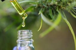 Cannabis thérapeutique : tout savoir sur l'expérimentation qui va démarrer