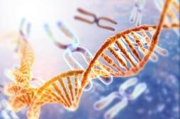 Comment l'ARN pourrait réparer l'ADN : une découverte inattendue