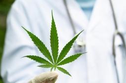 Le cannabis efficace contre les troubles obsessionnels compulsifs (TOC)