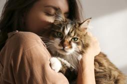 Vous adorez les chats ? Vous êtes sans doute un anxieux...
