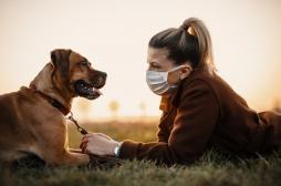Covid-19: les animaux domestiques peuvent aussi être infectés